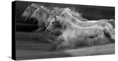 Gallop In The Repetition-Milan Malovrh-Stretched Canvas Print