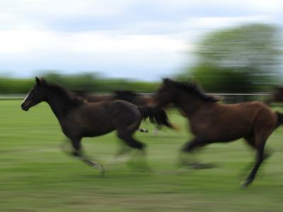 Galloping Horses at a Ranch-Raul Touzon-Photographic Print