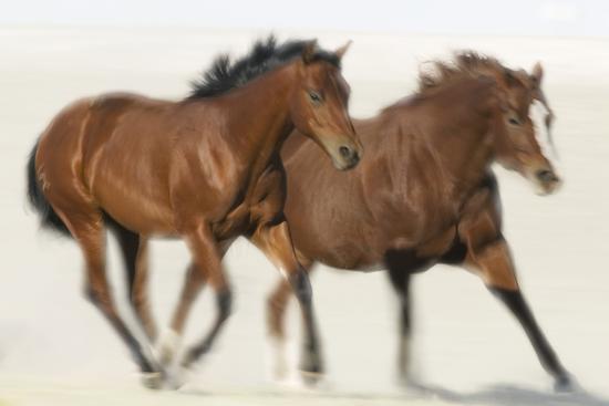 Galloping Quarterhorses-DLILLC-Photographic Print