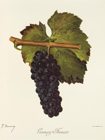 Gamay Freaux Grape-J. Troncy-Giclee Print