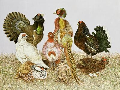Game Birds-Pat Scott-Giclee Print