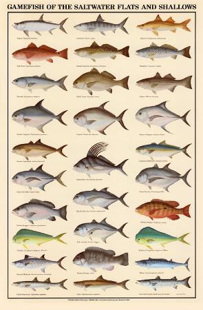 game-fish-of-the-saltwater-flats-and-shallows