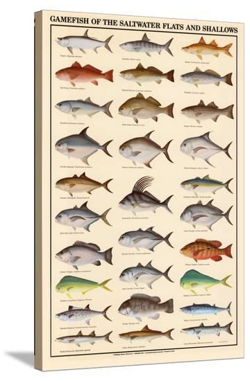 Game Fish of the Saltwater Flats and Shallows--Stretched Canvas Print