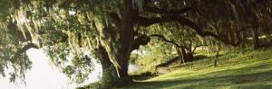 Garden at the Riverside, Middleton Place, Charleston, Charleston County, South Carolina, USA