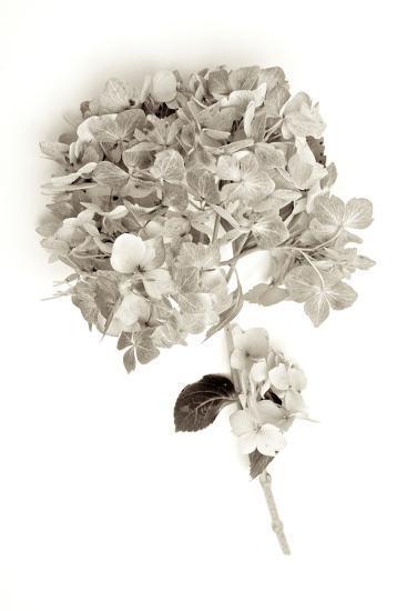 Garden Bloom #10-Alan Blaustein-Photographic Print