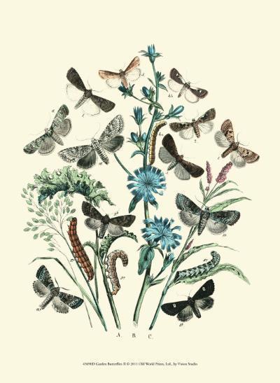 Garden Butterflies II--Art Print