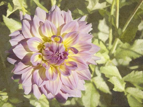 Garden Dahlias II-George Johnson-Photographic Print