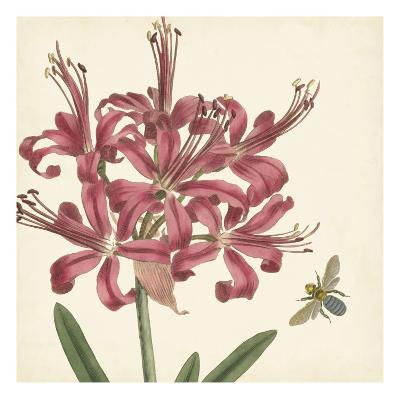 Garden Delight II--Art Print