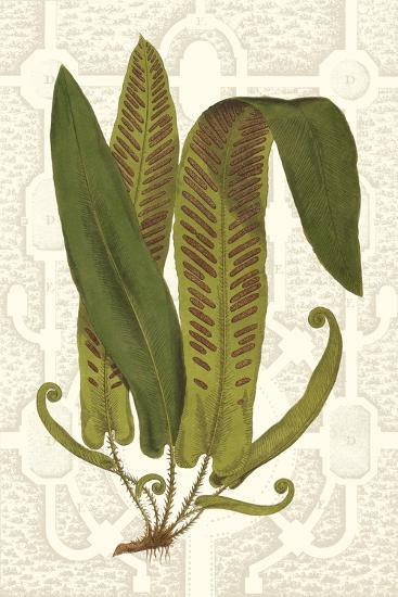 Garden Ferns I-Vision Studio-Art Print