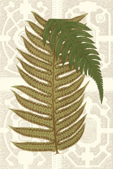 Garden Ferns II-Vision Studio-Art Print