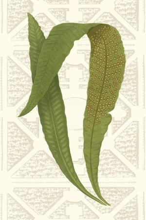 Garden Ferns IV-Vision Studio-Art Print