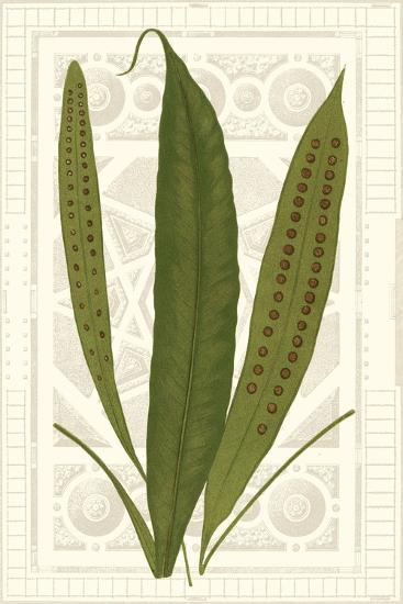 Garden Ferns VI-Vision Studio-Art Print