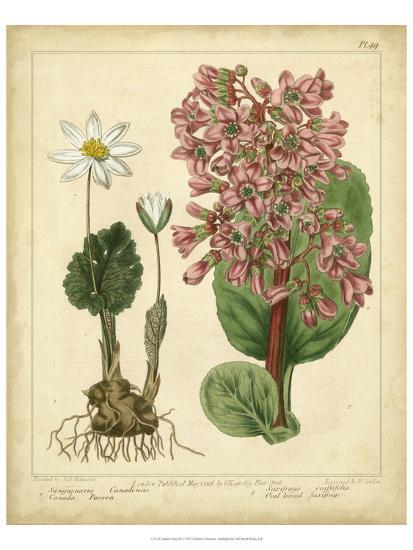 Garden Flora III-Sydenham Edwards-Art Print