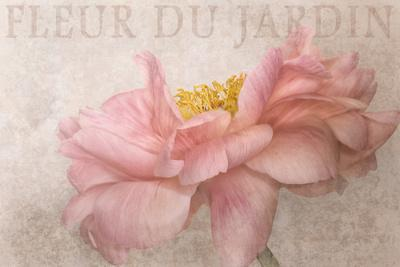 https://imgc.artprintimages.com/img/print/garden-flower_u-l-q1a6pa30.jpg?p=0