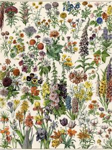 Garden Flowers, Lily, Daffodil, Tulip, Dahlia, Zinnia, Pansy, Marigold