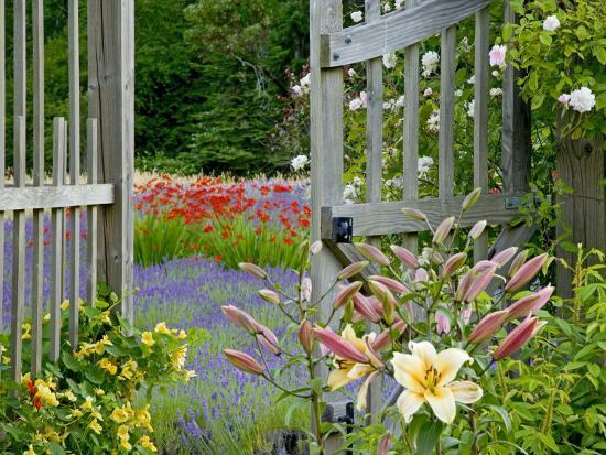 Garden Gate, Bainbridge Island, Washington, USA-Don Paulson-Photographic Print