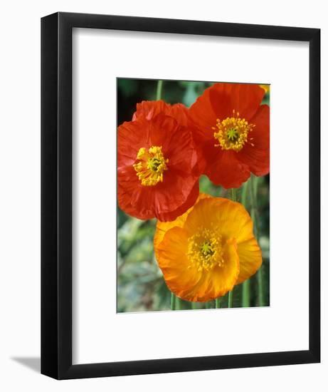 Garden Gnome-Chris Burrows-Framed Photographic Print