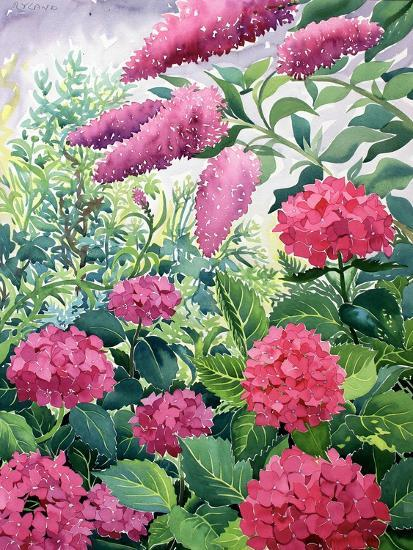 Garden Hydrangeas and Buddleia-Christopher Ryland-Giclee Print