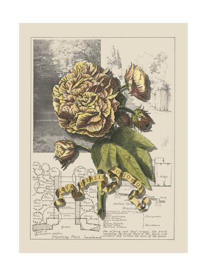 Garden in June II-Debbie Bookman-Art Print