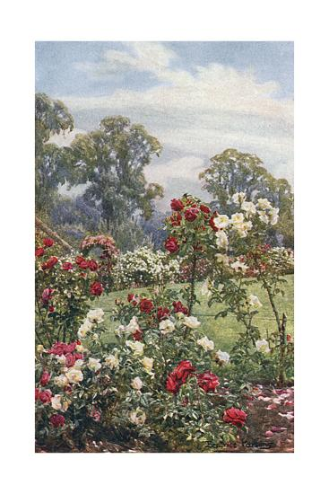 Garden, Newtown House-Beatrice Parsons-Giclee Print