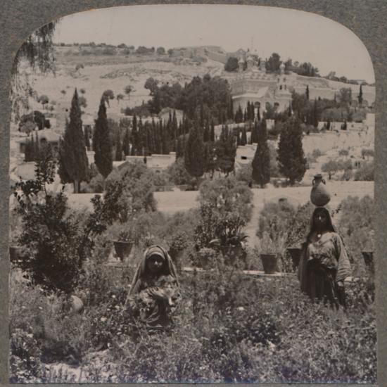 'Garden of Gethsemane and Mount of Olives from Greek Gardens', c1900-Unknown-Photographic Print
