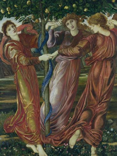 Garden of the Hesperides, 1869-73-Edward Burne-Jones-Giclee Print