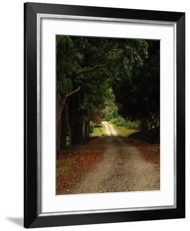 Garden of the Sleeping Giant, Nadi, Viti Levu-Walter Bibikow-Framed Photographic Print