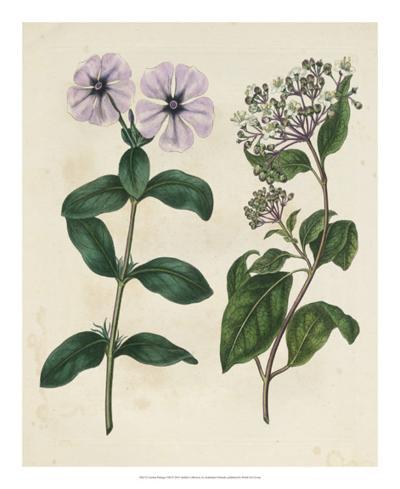 Garden Pairings VIII-Sydenham Edwards-Giclee Print