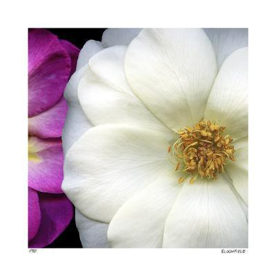https://imgc.artprintimages.com/img/print/garden-roses_u-l-f3krig0.jpg?p=0