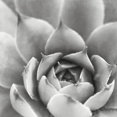 https://imgc.artprintimages.com/img/print/garden-succulent-iii_u-l-q1awutc0.jpg?p=0