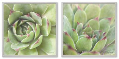 Garden Succulents Color Set
