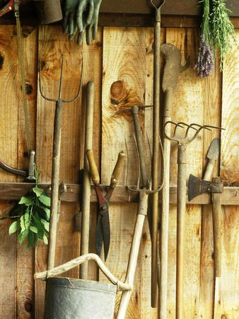 Garden Tools Hanging In Shed Fork, Shears, Rake, Lopper, Axe, Saw U0026  Gardening GlovesBy Martine Mouchy