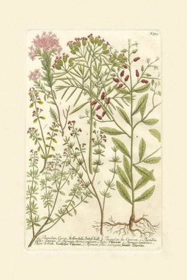 Garden Varietals I-Johann Wilhelm Weinmann-Art Print