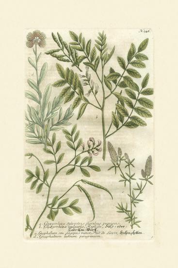Garden Varietals II-Johann Wilhelm Weinmann-Art Print