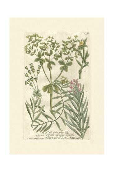 Garden Varietals III-Johann Wilhelm Weinmann-Art Print