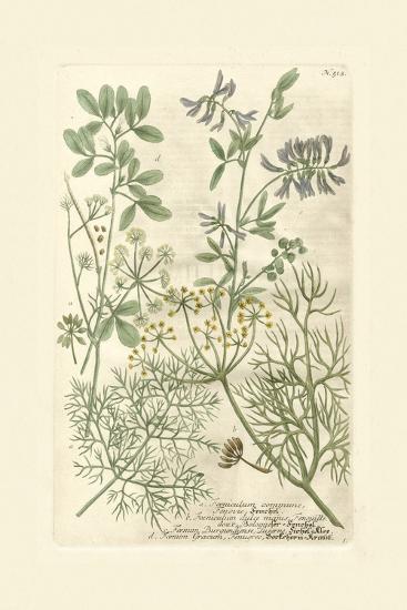 Garden Varietals IV-Johann Wilhelm Weinmann-Art Print