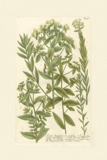 Garden Varietals V-Johann Wilhelm Weinmann-Art Print