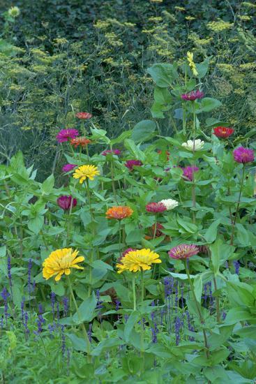 Garden views, Indianapolis gardens, Indiana, USA-Anna Miller-Photographic Print