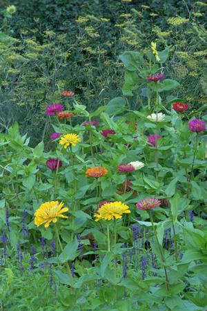 https://imgc.artprintimages.com/img/print/garden-views-indianapolis-gardens-indiana-usa_u-l-q10vvcu0.jpg?p=0