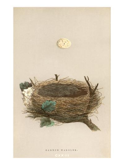 Garden Warbler Egg and Nest--Art Print
