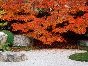 Garden with Autumn Leaves at Tenjuan, Nanzen-Ji Temple, Kyoto, Japan