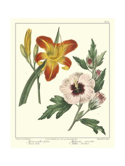 Gardener's Delight IV-Sydenham Teast Edwards-Art Print