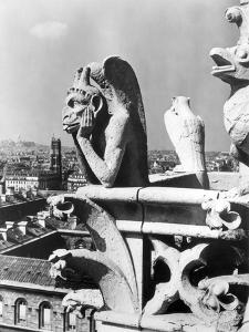 Gargoyle: Notre Dame