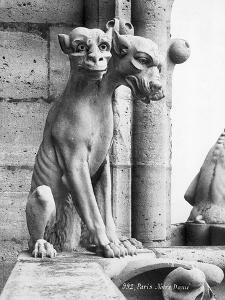 Gargoyle of Cerebus at Notre Dame