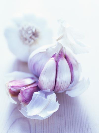 Garlic Bulbs-David Munns-Photographic Print