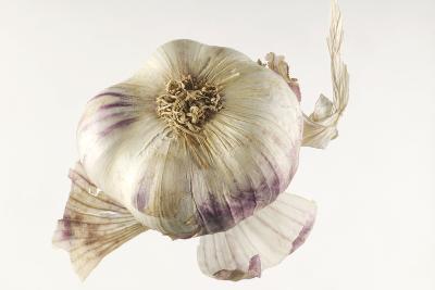 Garlic--Photographic Print