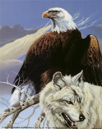 EAGLE ART PRINT Through the Firs by Ron Parker Wildlife Poster Soaring 24x36