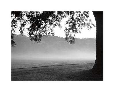 Fog in the Park I