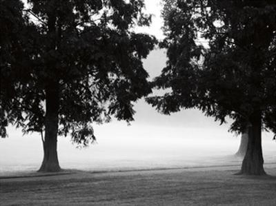 Fog in the Park II by Gary Bydlo