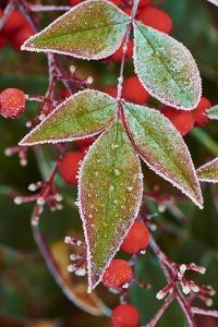 Frost; Leaves by Gary Carter